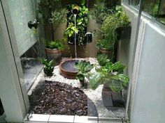 New Tropical Patio Plants Winter 15 Ideas Balcony Plants, Patio Plants, Indoor Plants, Garden Plants, Tropical Patio, Interior Garden, Interior Design, Winter Garden, Zen Gardens