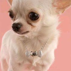 Dogs' Jewelry Wish- Pet Necklace