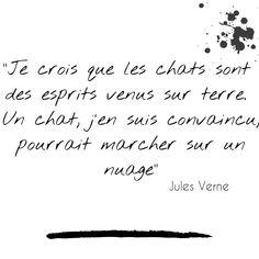 Citation chat sélectionnée par la Tribu de chats Jules Verne, Literature Quotes, Bloom, Cat Love, Cats, Gifts