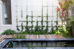 In a tranquil contemporary garden, a full scale wall trellis turns what would have been a blank white wall into the perfect finishing touch to an enclosed courtyard.