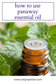 Need tips for using panaway? This post is super helpful. She goes through all the oils that make up the blend and gives you a bunch of helpful ways to use it. Raven Essential Oil, Panaway Essential Oil, Essential Oils For Massage, Buy Essential Oils, Essential Oils Cleaning, Natural Essential Oils, Young Living Essential Oils, Essential Oil Blends, Panaway Oil