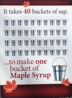 Maple Syrup Tree, Homesteading, Trees, Camping, Campsite, Tree Structure, Wood, Campers, Tent Camping
