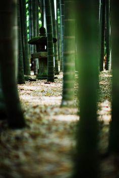 Japanese bamboo #modern garden design #garden interior| http://beautiful-garden-decors.lemoncoin.org