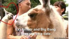 f(x) amber and Taeyang on a date..