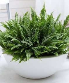 Container gardening is a fun way to add to the visual attraction of your home. You can use the terrific suggestions given here to start improving your garden or begin a new one today. Your garden is certain to bring you great satisfac