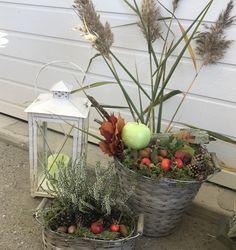 Terrarium, Fall, Outdoor Decor, Plants, Home Decor, Terrariums, Autumn, Decoration Home, Fall Season