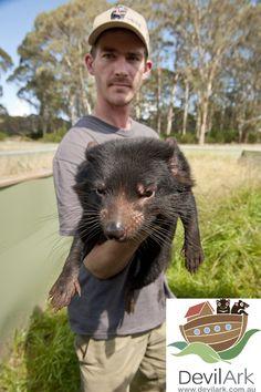 Keeper and Tasmanian devil @ Devil Ark