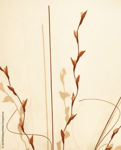 manhãs perfeitas: Flowers in the wall // INSTAGRAM