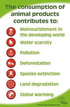 What the consumption of animal products contributes to