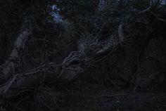 buron:  After Dusk (vi) sydburon - December 15