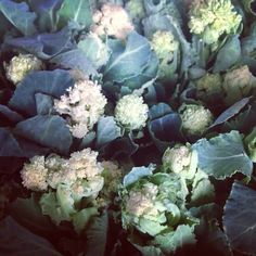 Nothing can beat the tender sweetness of the White sprouting broccoli