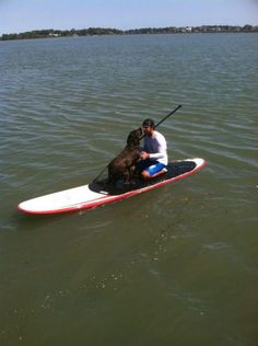 Paddle Boarding, I wish one of our dogs was well behaved enough for this!    #Paddleboardshop #paddleboard #paddleboarding