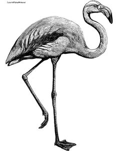 Image from http://images.clipartpanda.com/flamingo-coloring-pages-flamingo106.jpg.
