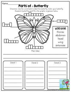 Parts of a Butterfly- Great science activity found in the Second grade NO PREP Packet for March