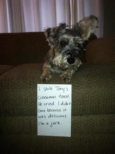 Schnauzer shaming - If they could really only talk and leave little love notes!