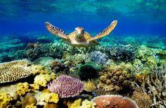 Great Barrier Reef. Qld. Australia