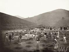 Marc Ferrez. Escravos em terreiro de uma fazenda de café na região do Vale do Paraíba, c. 1882. Vale do Paraíba, RJ.