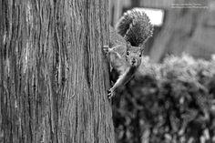 L'ultimo scoiattolo dei parchi di #Nervi, #Genova, si lascia catturare dalla lente di Dra Miau @Eubastet