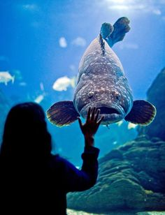 If you haven't seen anything like Oceanário de Lisboa before, you are in for a treat. no one will regret visiting the second largest aquarium in the world!
