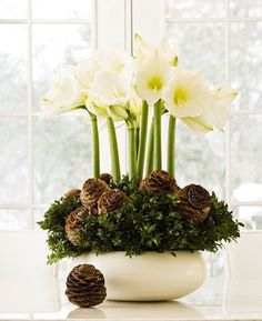 ♆ Blissful Bouquets ♆ gorgeous wedding bouquets, flower arrangements & floral centerpieces - white christmas bouquet of amaryllis bulbs, bunched boxwood branches, and pine cones Christmas Flower Arrangements, Christmas Flowers, Winter Christmas, Floral Arrangements, Christmas Decorations, Christmas Bowl, Christmas Hanukkah, Holiday Decorating, Simple Christmas