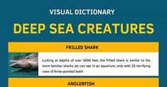 Deep Sea Creatures List with Amazing Facts and Pictures 1 Frilled Shark, Goblin Shark, Leafy Sea Dragon, Ugly Animals, Creature Picture, Visual Dictionary, Pretty Names, Deep Sea Creatures, English Writing Skills