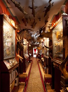 Jacques Garcia's cabinet of curiosities http://www.1stdibs.com/introspective-magazine/jacques-garcia/