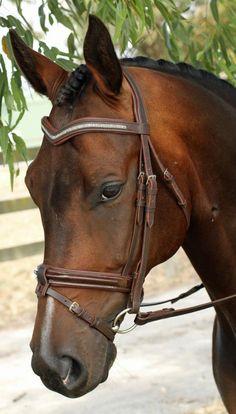Brown Dressage bridle... want! - Flexi Fit Havana Brown Bridle