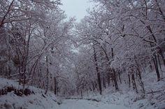 A winter road in Missouri