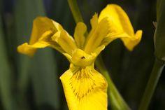 140420-spring garden-036