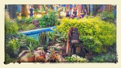 Jardin museo frida kalo
