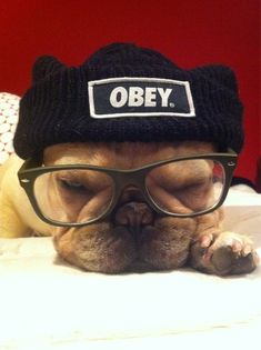 05cdb15331033 Obey the Frenchie! But whatever you do