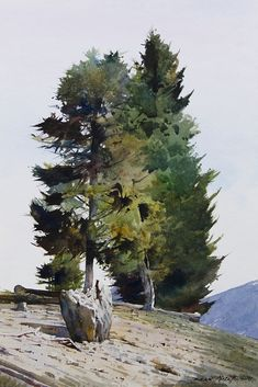 Colorado Pine - Dean Mitchell - I think this is a lovely fresh watercolour. Love the colours and the content. S