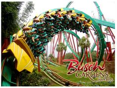 Busch Gardens  Tampa Bay, FL