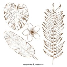 Free vector Hand drawn tropical leaves #14461