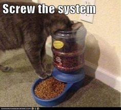 Screw the system