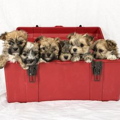 Puppies! #puppies #Cute