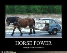 funny horse pictures with captions - Google Search