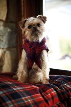 "ralphlauren: """" Ralph Lauren Holiday "" Discover gifts for every member of the family, including your cuddly companions Shop RL Pets "" I Love Dogs, Puppy Love, Cute Dogs, Tartan Christmas, Christmas Time, Brussels Griffon, Mans Best Friend, Dog Life, Dog Bed"