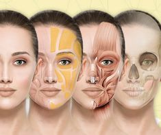 Injecting techniques are constantly changing however, the foundations of facial anatomy needs to be understood in-depth, as only a doctor can. The following needs to be taken into consideration with facial anatomy: - facial fat compartments - bone ageing - the vasculature (facial veins) - muscular interaction - the neural complex (facial nerves) - the skin thickness These form the scaffolding of the face.   #SkinRenewalSA #skin #beauty #injectables  #aesthetics #medicalaesthetics #MDCodes Skin Anatomy, Facial Anatomy, Facial Bones, Aesthetic Dermatology, Facial Nerve, Aesthetic Clinic, Sagging Skin, Scaffolding, Acne Skin