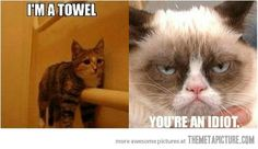 Stupid Cat acting like a towel=Grumpy Cat telling you that your an idiot