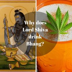 Why does Lord Shiva drink Bhang? Read more to know!