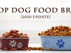15 Top Dog Food Brands (2021) Top Dog Food Brands, Top Dog Foods, Homemade Flea Spray, Kill Fleas On Dogs, Best Dry Dog Food, Worms In Dogs, Dog Diet, Grain Foods, Homemade Dog Treats