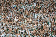 Palmeiras valoriza goleada sobre Capivariano antes da Libertadores - Gazeta Esportiva