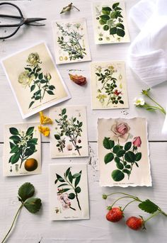 Learn how to make stunning botanical labels or tags (with 3 different borders) that you can use for your farmhouse, cottage, shabby chic or vintage homes