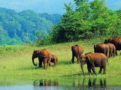 Koyna Wildlife Sanctuary - in Maharashtra, India