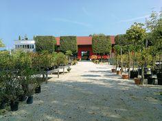 Wir nützen die sonnigen Spätsommertage im Freien, um alles in Form zu bringen. Wo sich in unseren Beeten Lücken aufgetan haben, haben wir genau die richtigen Pflanzen um auch im Herbst und Winter den Garten genießen zu können. Und kleiner Tipp: Wer jetzt pflanzt spart sich viel gießen, denn nächste Woche kommt der Regen! #garten #blumen #pflanzen #gärtner #gärtnerei #sommer #herbst #gartenliebe #blütenmeer #kriegergut #baumschule #perg #schwertberg #leonding #linz #amstetten #naarn… Dolores Park, Sidewalk, Winter, Travel, Landscape Nursery, Landscape Diagram, Planting Flowers, Linz, Outdoor