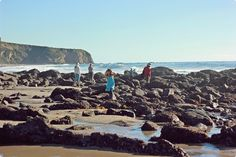 Tide pools - Salt creek beach in Dana Point, CA.  Loved going here for elementary school field trips.