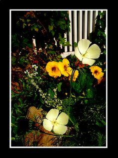 Flowers Photograph, Pumpkin, Photo And Video, Flowers, Outdoor, Photography, Outdoors, Pumpkins, Photographs