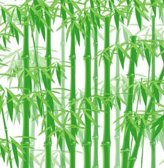 Green Bamboo Vector Forest - http://www.welovesolo.com/green-bamboo-vector-forest/
