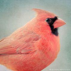 Bird Art  Red Cardinal Bird Print  Animal Art by NatureMandalas, $25.00